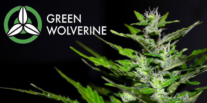 GreenWolverine_Splash_0219