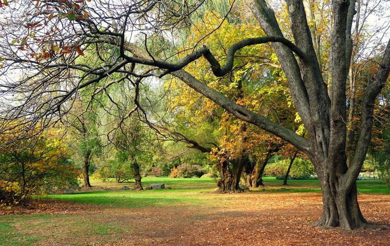 autumn-943715_1280