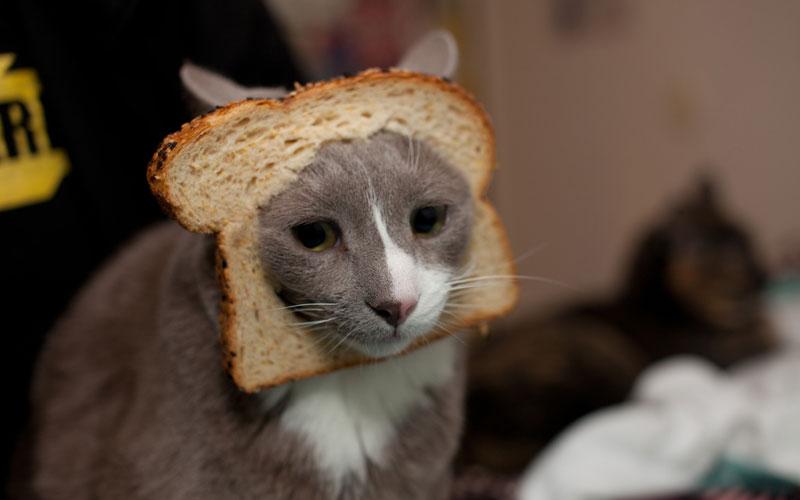 cat_bread