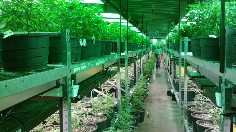 The new law gives landlords the power to prohibit growing or smoking cannabis on the premises of leased residential properties