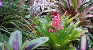 Botanical gardening at the Arb could be the romantic outing for you.