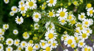 Robin Hills Farm is hosting a Wildflower Design Class