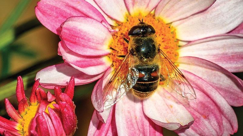 ann-arbor-bee-council
