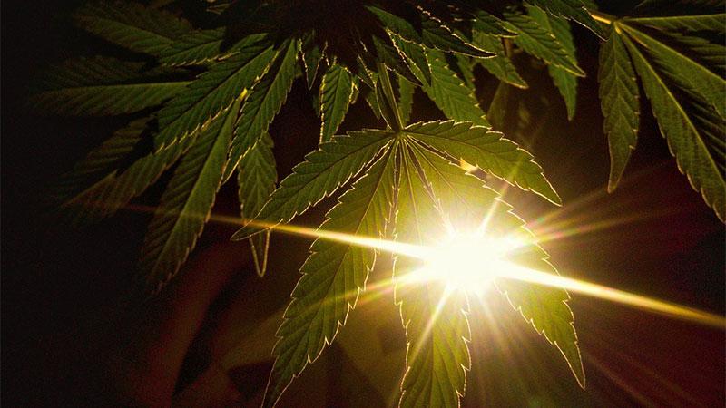 weed-2967503_1280