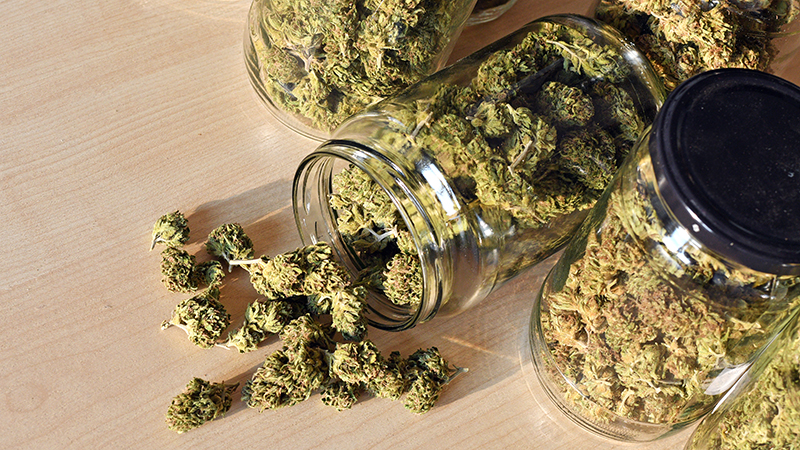dry-and-trimmed-cannabis-buds-stored-in-a-glas-PP4THVA